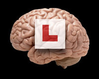 Human brain with learner sign Stock Photo
