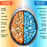 Human brain left and right functions. IIlustration body part,human brain left and right functions Royalty Free Stock Image