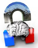 Human Brain and Magnet Royalty Free Stock Photo