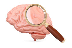 Human brain with magnifier, 3D rendering. Isolated on white background stock illustration