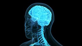 The human brain. Medical 3d animation of the human brain stock video footage