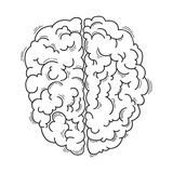 Human brain for medical design Royalty Free Stock Photo