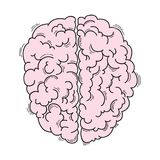 Human brain for medical design Royalty Free Stock Photography