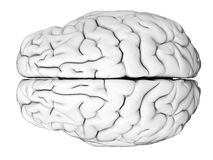 The human brain Royalty Free Stock Images