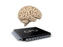 Human brain and microprocessor Stock Photo
