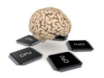 Human brain and microprocessor Stock Images