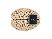 Human brain and microprocessor Royalty Free Stock Image