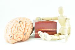 Human brain model Royalty Free Stock Photography