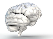 Human brain model on white background Royalty Free Stock Photography