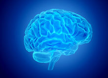 Human brain Royalty Free Stock Images