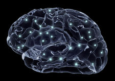 Human brain and neurons Stock Photo
