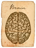 Human brain, old manuscript. Stock Photography