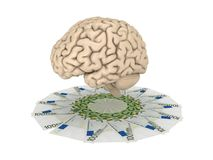 Human brain and pack of euro Royalty Free Stock Image