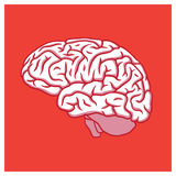 Human brain profile illustration on red background Stock Photography