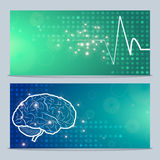 Human brain and pulse Stock Image