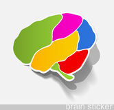 Human brain, realistic design elements Stock Image