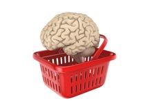Human brain at red basket Stock Image
