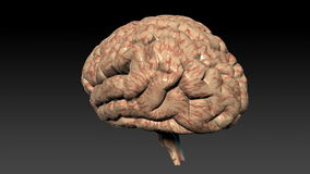 Human brain rotating,seamless loop,Alpha Channel, stock footage Royalty Free Stock Photography