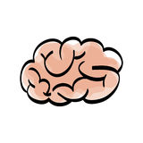 Human brain scribble Royalty Free Stock Image