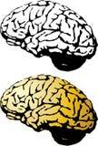 Human brain set Royalty Free Stock Image