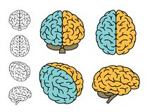 Human brain. Set of multiple Views. Vector illustration. Human brain anatomy. Set of multiple views. Left brain versus right Brain with colours. Vector royalty free illustration