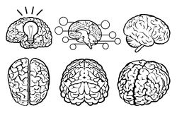Human Brain Set Stock Images