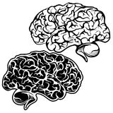 Human Brain sketch cartoon vector illustration Stock Photos