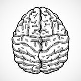 Human brain sketch. Human brain cortex top view sketch isolated on white background vector illustration royalty free illustration