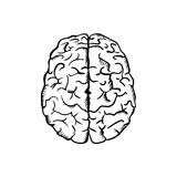 Human brain sketch in ouline style Royalty Free Stock Image