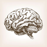 Human brain sketch style vector illustration Royalty Free Stock Images
