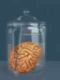 Human brain in a specimen jar. 3D rendering of the human brain in a specimen jar resting on a table Stock Photography