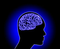 Human Brain - Stock Illustration Stock Images