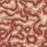 Human brain texture seamless stock illustration