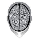 Human brain top view. Illustration body part , Human brain top view Stock Photography