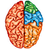 Human brain top view. Illustration body part vector, human brain top view Royalty Free Stock Photo