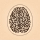 Human brain. Top view Stock Image