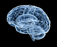 Human brain under x-ray. Side view of human brain Royalty Free Stock Images