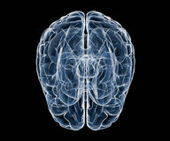 Human brain under x-ray. Top view of human brain Stock Photos