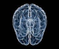 Human brain under x-ray Stock Photos