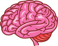 Human brain vector Royalty Free Stock Photos