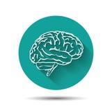 Human brain vector icon flat illustraton with