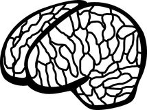 Human brain vector illustration Stock Photo