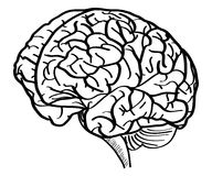 Human Brain Vector Outline Sketched Up Royalty Free Stock Photography