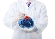 The human brain. Very high resolution 3d rendering of an human brain Stock Photos