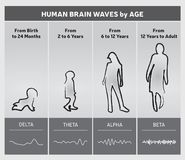 Human Brain Waves by Age Chart Diagram - People Silhouettes. 4 Stages in Gray Tones Stock Image