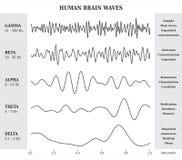 Human Brain Waves Diagram / Chart / Illustration Royalty Free Stock Images