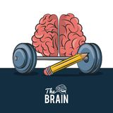 The human brain. With weights and pencil vector illustration graphic design royalty free illustration