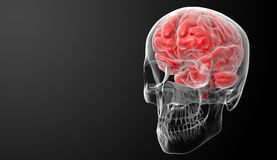 Human brain X ray Stock Photos