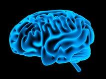 Human brain xray stock illustration