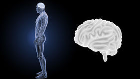 Human Brain zoom with anatomy lateral view Stock Photos